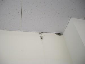 室内調査(天井雨染み)
