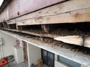 外壁下地の腐朽