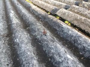 石綿スレート波板屋根雨漏り